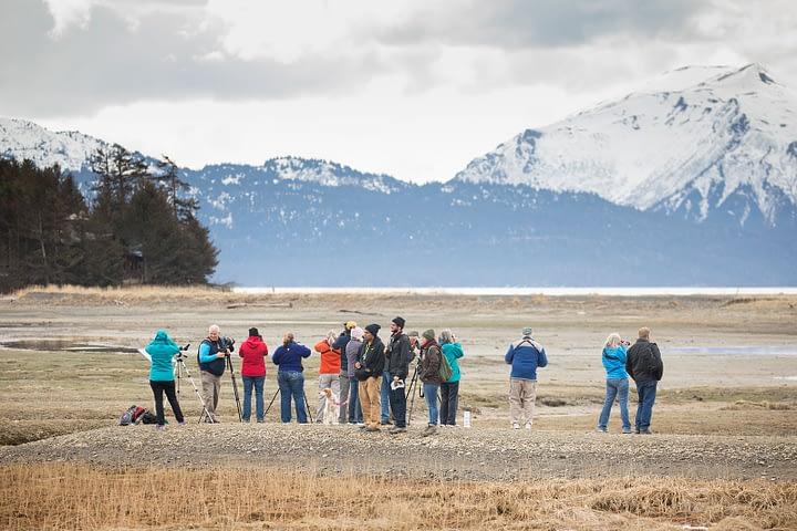 birdwatching in Alaska