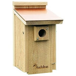 audubon coppertop bluebird nestbox